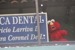 Tickle Me Elmo's forgotten cousin….Gingivitis Elmo