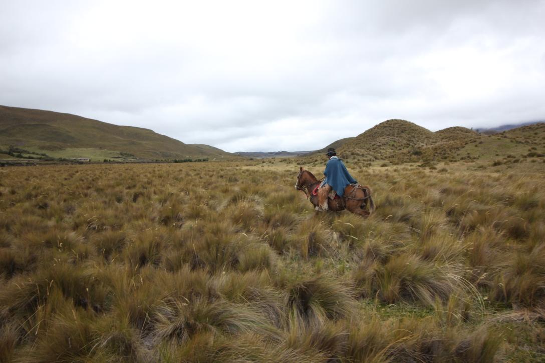 Vaquero in Cotopaxi