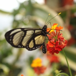 The fragile, butterfly beauty of life